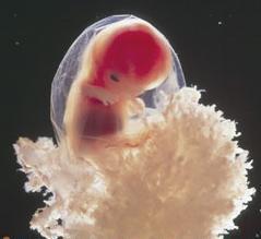 Беременность в картинках